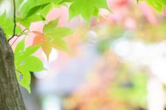 秋の色、はじまりはじまり。