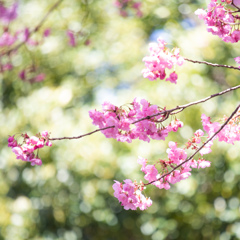 桜の季節 Ⅰ