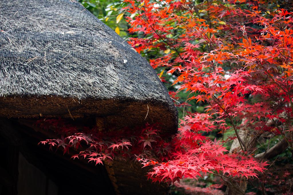 六義園の紅葉 Ⅱ