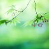 『小さな小さな春の花』