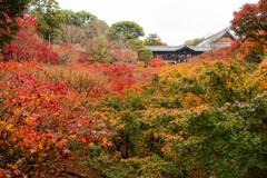 晩秋の東福寺で Ⅰ