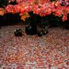 光明院の紅葉。