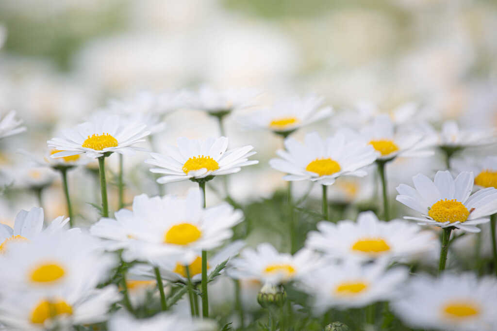 春のハーモニー Ⅰ