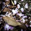 落ち葉&花。