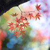 紅葉。いろいろ。 Ⅲ