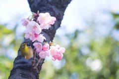 Spring has come !