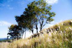 高原の木。