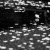 『桜の涙』 Ⅱ
