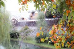 伏見の秋景色 Ⅰ