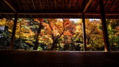 晩秋の圓光寺で Ⅴ