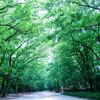 新緑の季節に糺の森で。