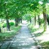 初夏の散歩道