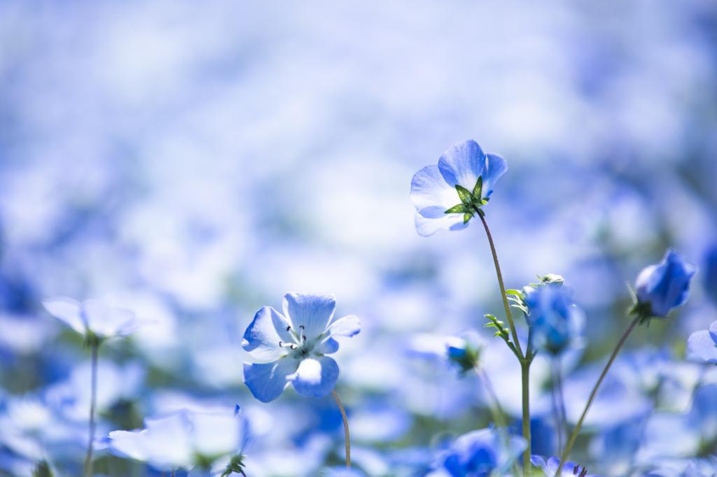 『限りなく透明に近いブルー』