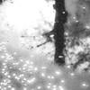 『桜の涙』