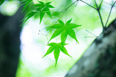 GREEN Ⅶ