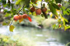 伏見の秋景色 Ⅱ