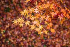 晩秋の東福寺で Ⅱ
