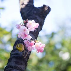 Spring has come ! ②
