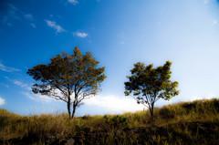 夫婦の木。