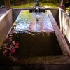 永観堂・手水鉢の紅葉