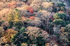 晩秋の嵐山 Ⅳ