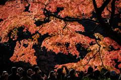 紅葉を撮る。