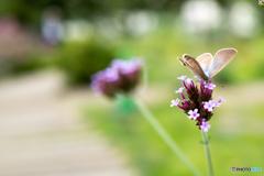 小~さな花と蝶
