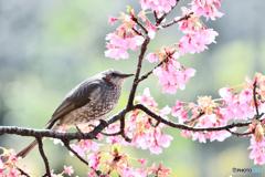 花鳥図 ろ