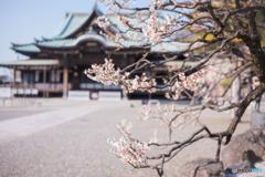 ぶらり本門寺界隈
