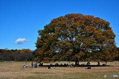 公園の秋4