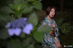 紫陽花とべっぴんさん3