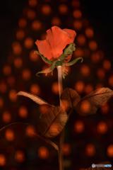 オレンジドットと赤いバラ