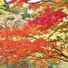 秋色七変化