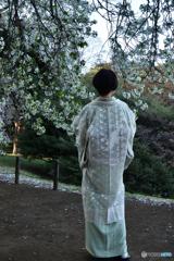 桜に似合うお召し物