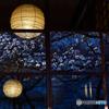 九条館から桜を見る