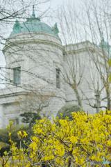 早春の小さな黄色い花