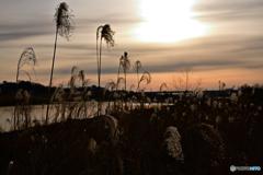 早朝の河原4