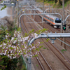桜咲く中を走る中央快速