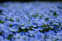 青色の絨毯 !(^^)!