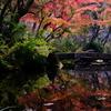 秋の深まり・・・