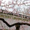 ・・・梅咲き誇る春