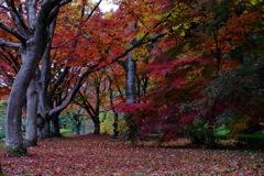 ・・・秋から冬へ