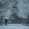 冬ソナの並木路(雪景色バージョン)