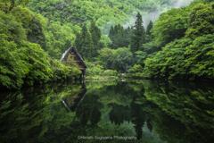 新緑の季節に(松尾池②)