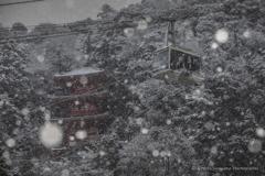 雪景色(岐阜公園)