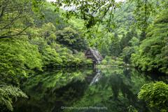 新緑の季節(松尾池①)