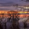 水中木(湖北2020)