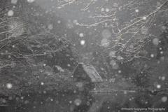 茅葺屋根の雪化粧(松尾池)