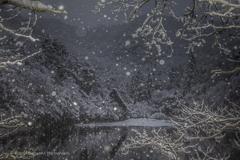 謹賀新年(雪降る松尾池)