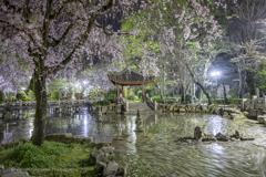 日中友好庭園の夜桜と花筏